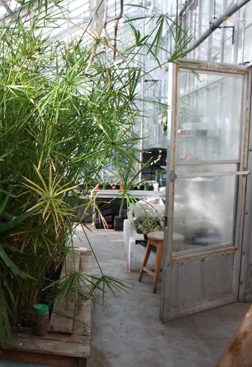 Concordia greenhouse
