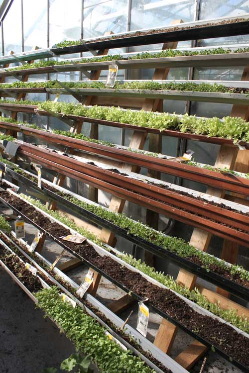 lettuce project