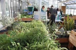 Greenhouse Atrium